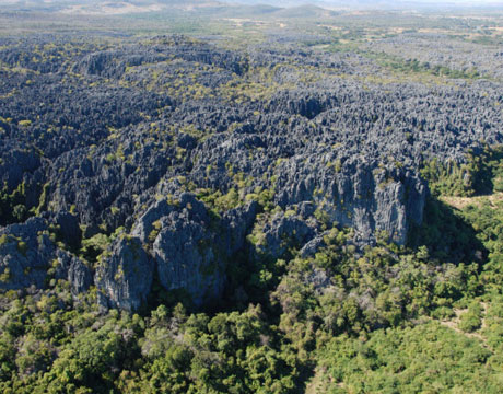 madagascar-dry-forests-lg