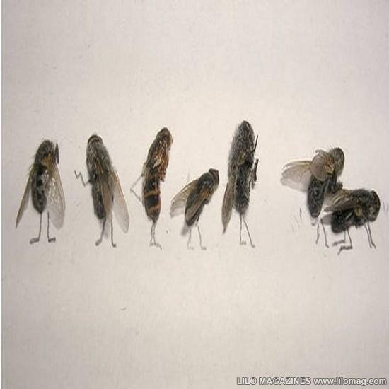 117094xcitefun-dead-flies-art-15