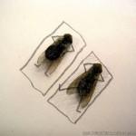 Nekonečná zábava s mŕtvymi muchami