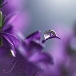 40 Makro/HDR fotiek rosy a kvetov