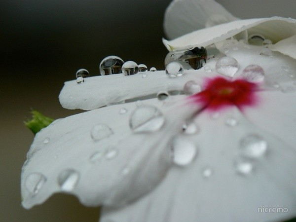BeautifulDewDrops33