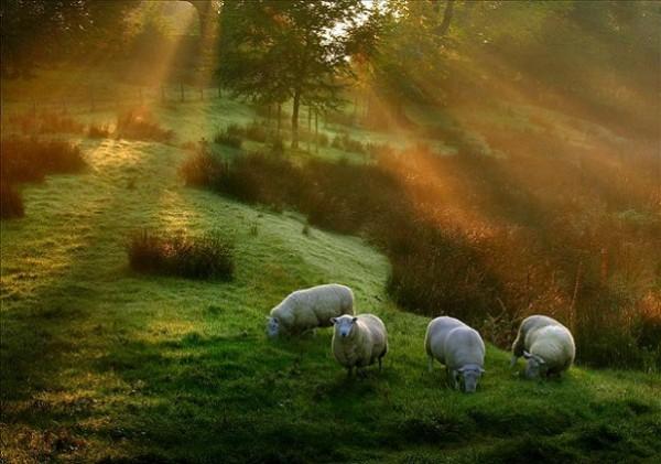 Morning-Glory-5