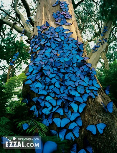blue-fall