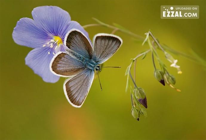 butterfly-in-the-purple-flower