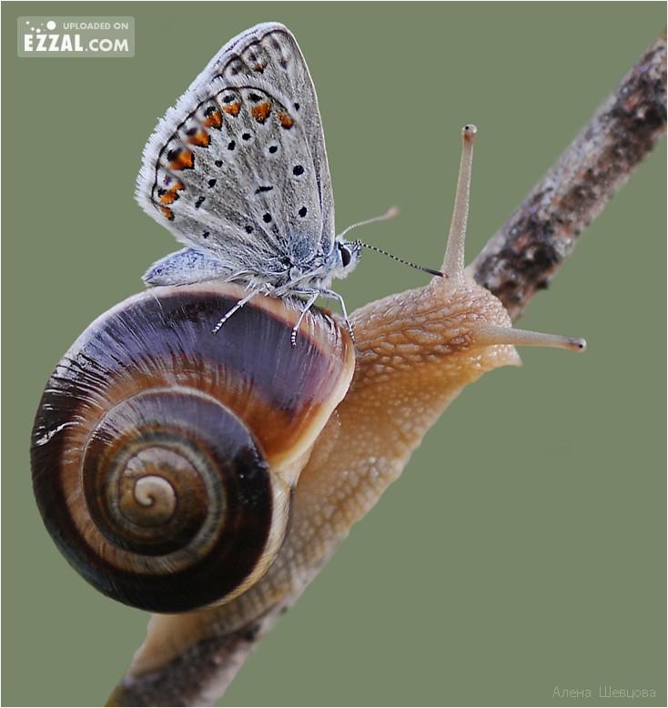 butterfly-slow-ride