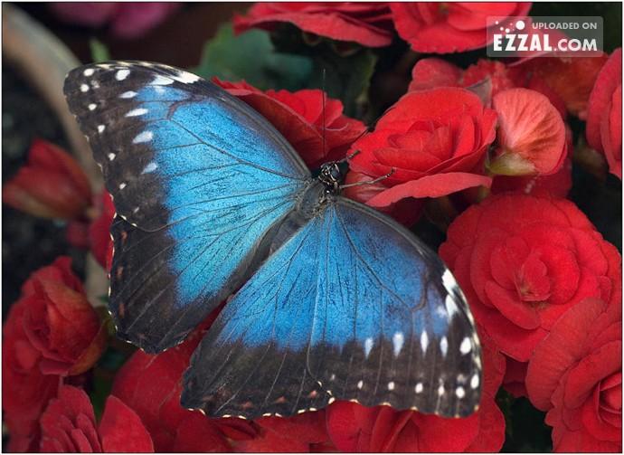 cute-butterfly1