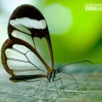 14 skvelých fotiek motýľov