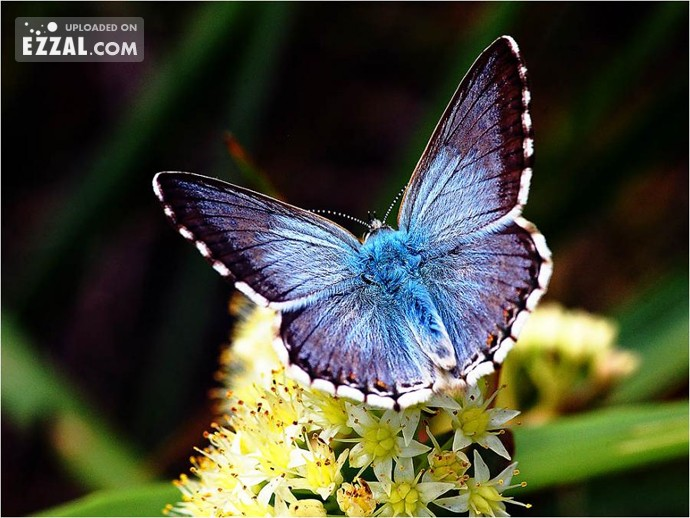 glowing-butterfly