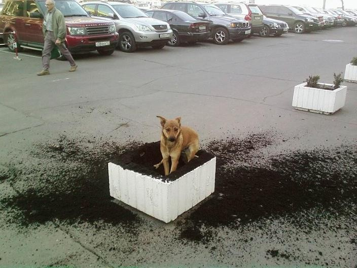 i-didnt-do-it-dog-digs-up-flower-bed