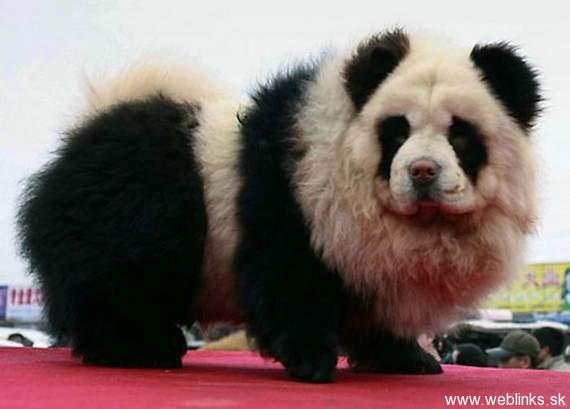 Pes+panda+tiger+mixer