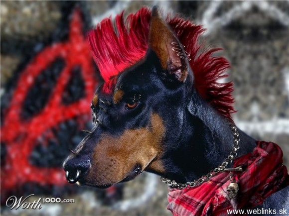 Punk rock zoo