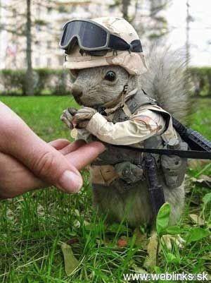 bojova-vevericka