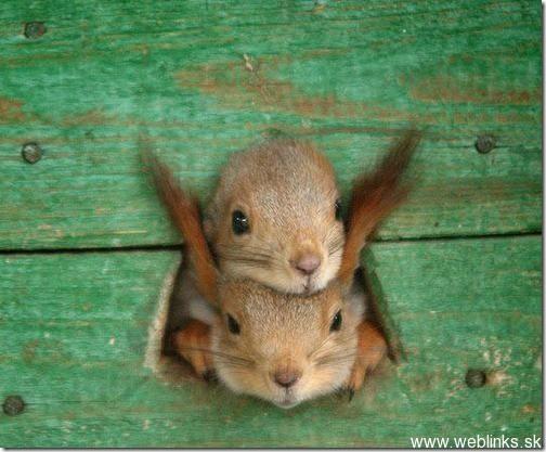 squirrel1_thumb