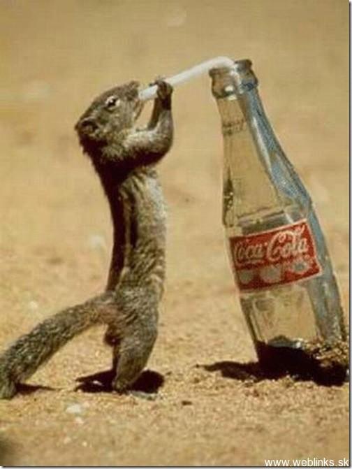 squirrel3_thumb