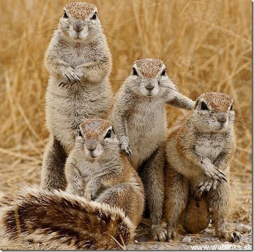 squirrel6_thumb