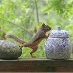 Veveričky na amfetamínoch