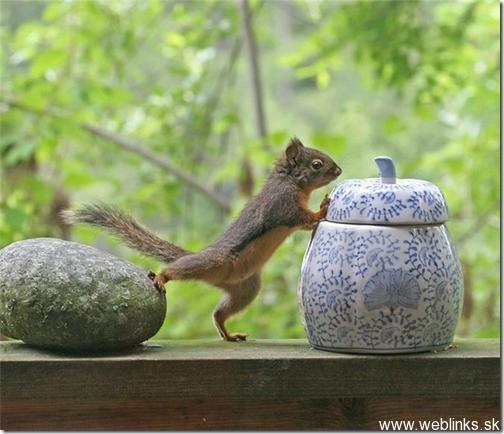 squirrel7_thumb