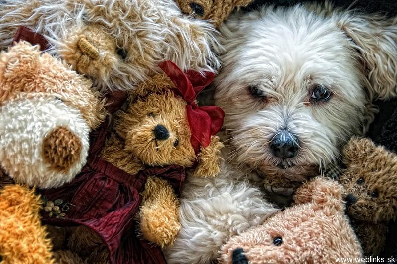 Hra: nájdi psa!