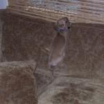 Obrázkoviny: Poschovávané zvieratkovo
