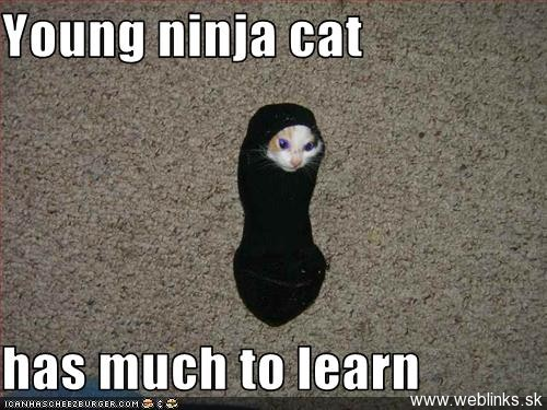 32 Ninja mačiek (s trochou kung fu, karate a jiu jitsu)