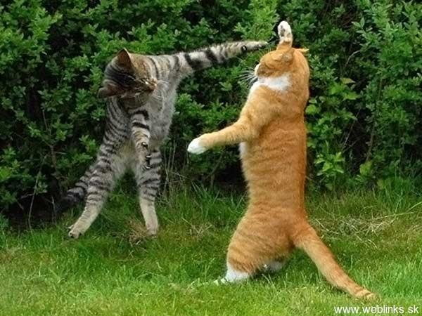 ninja macky haluze zabava nuda ninja cat weblinks_sk12
