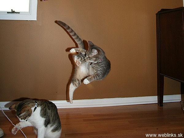 ninja macky haluze zabava nuda ninja cat weblinks_sk16