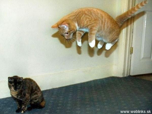ninja macky haluze zabava nuda ninja cat weblinks_sk17