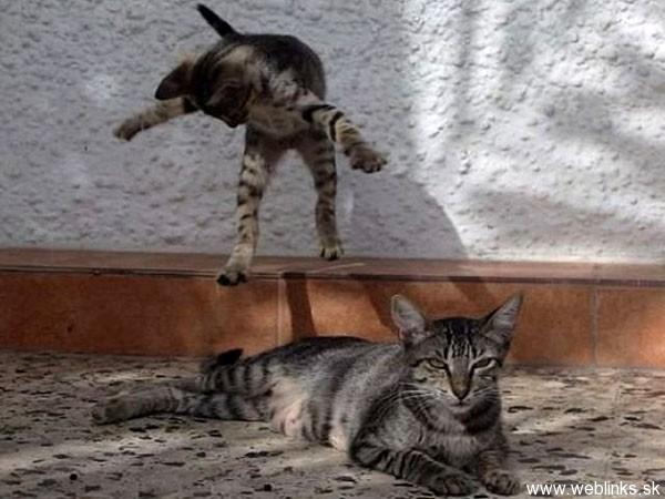ninja macky haluze zabava nuda ninja cat weblinks_sk18