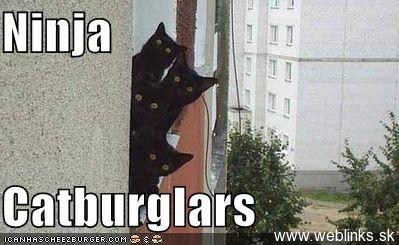 ninja macky haluze zabava nuda ninja cat weblinks_sk2