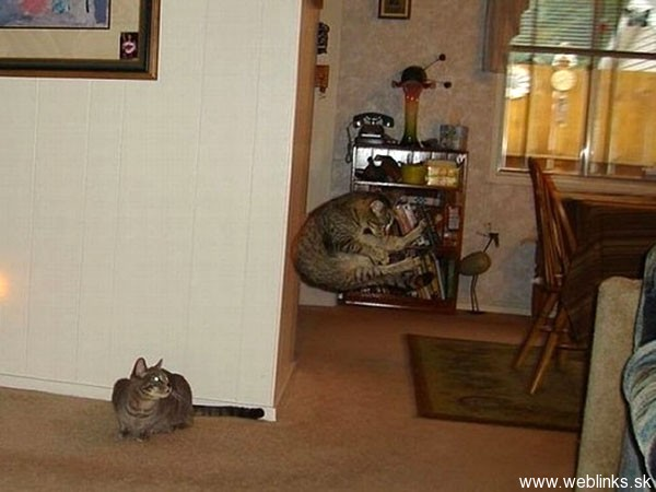 ninja macky haluze zabava nuda ninja cat weblinks_sk22
