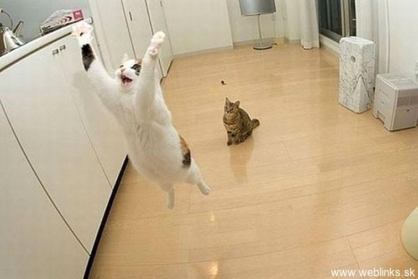 ninja macky haluze zabava nuda ninja cat weblinks_sk23
