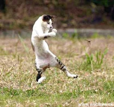 ninja macky haluze zabava nuda ninja cat weblinks_sk24