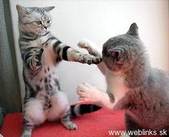ninja macky haluze zabava nuda ninja cat weblinks_sk26