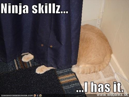ninja macky haluze zabava nuda ninja cat weblinks_sk30