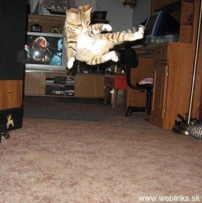 ninja macky haluze zabava nuda ninja cat weblinks_sk4