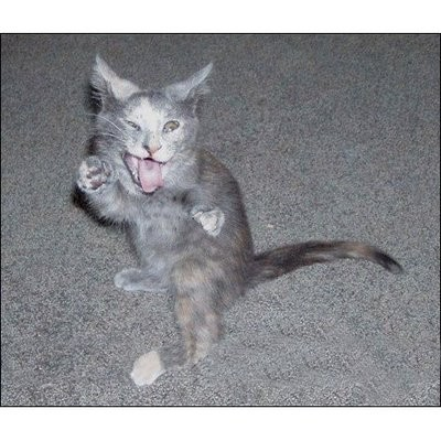 ninja macky haluze zabava nuda ninja cat weblinks_sk5