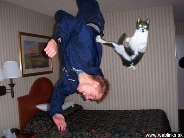 ninja macky haluze zabava nuda ninja cat weblinks_sk6