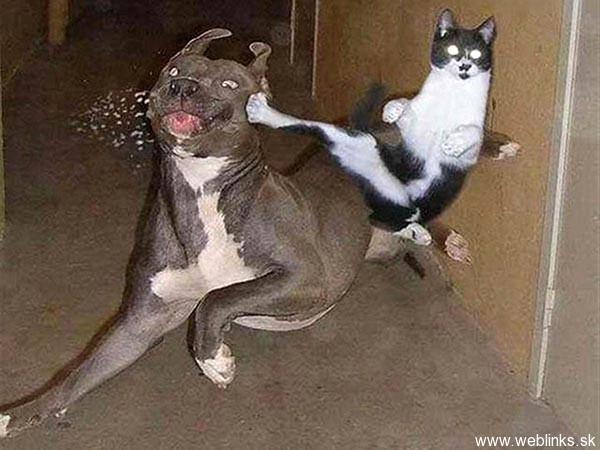 ninja macky haluze zabava nuda ninja cat weblinks_sk7