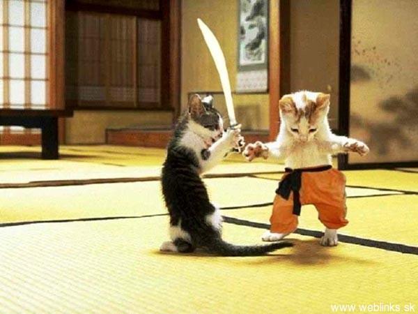ninja macky haluze zabava nuda ninja cat weblinks_sk8