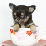 Chutnučkí havkovia v šáločkách od čajíku :)