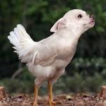 Američania vyrobili nové zvieratká