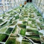 Google Earth koberec