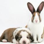 Nájdi zajaca: