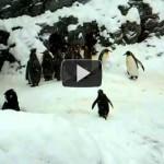 Tučniak, čo dostal na Vianoce Xbox