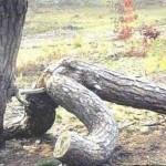 Obrázkoviny a haluze 17 špeciál: Nemravná príroda