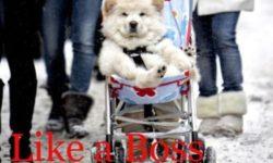 Obrázkoviny a haluze špeciál: Boss Edition (14 ks)