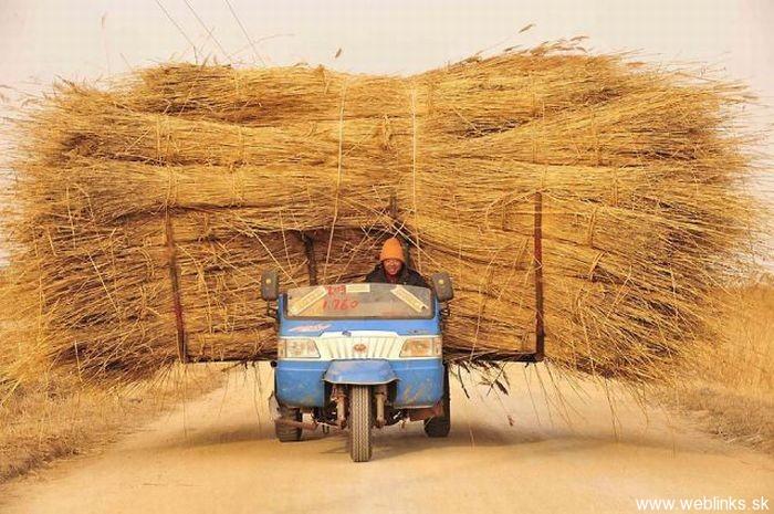 CHINA FARMING
