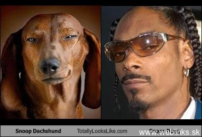 snoop_dachshund_totally_looks_like_snoop_dog_Funny_Celebrity_Look_Alikes-s401x271-96428-580
