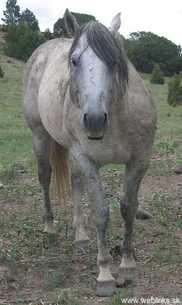 emo-horse-2