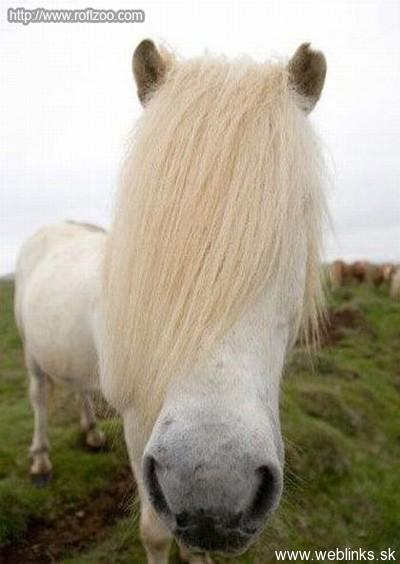 emo-horse